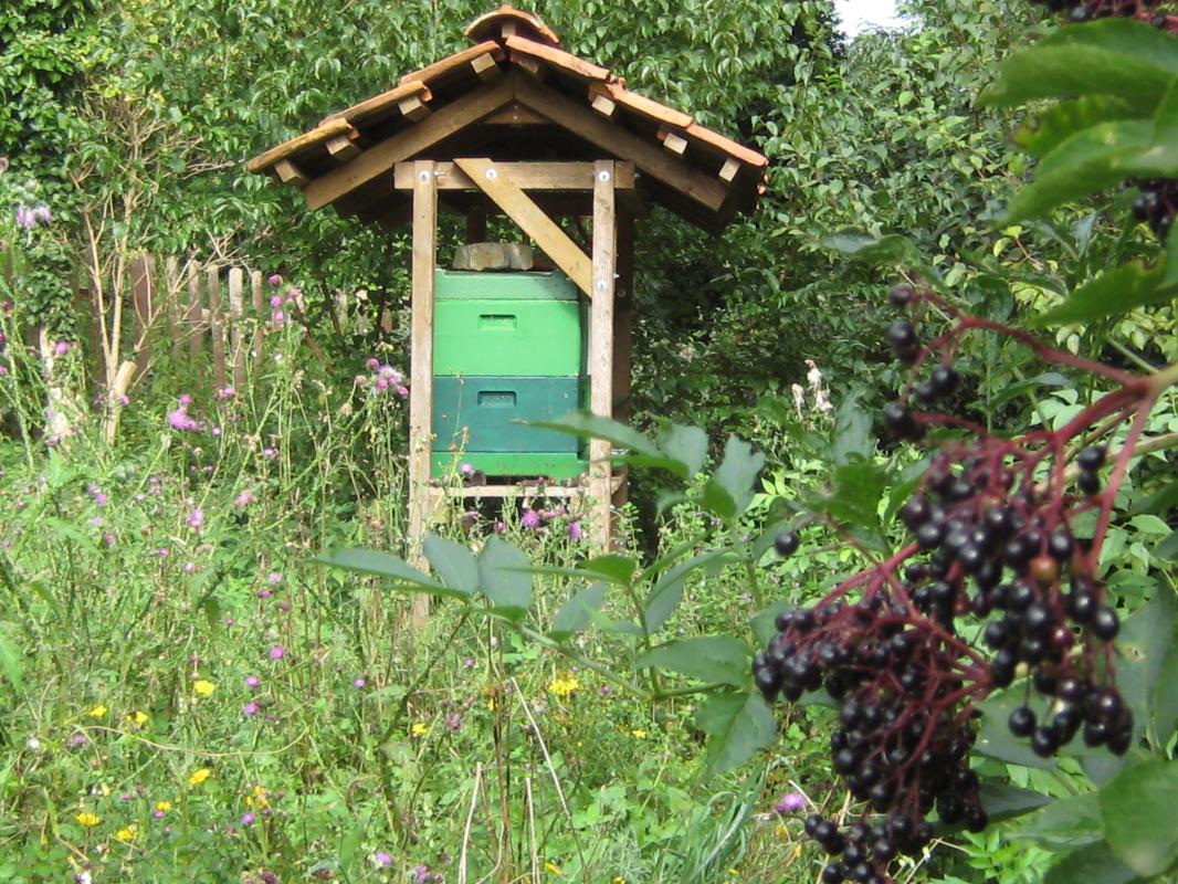 Für die Bienen  bleibt noch genug  Nahrung.