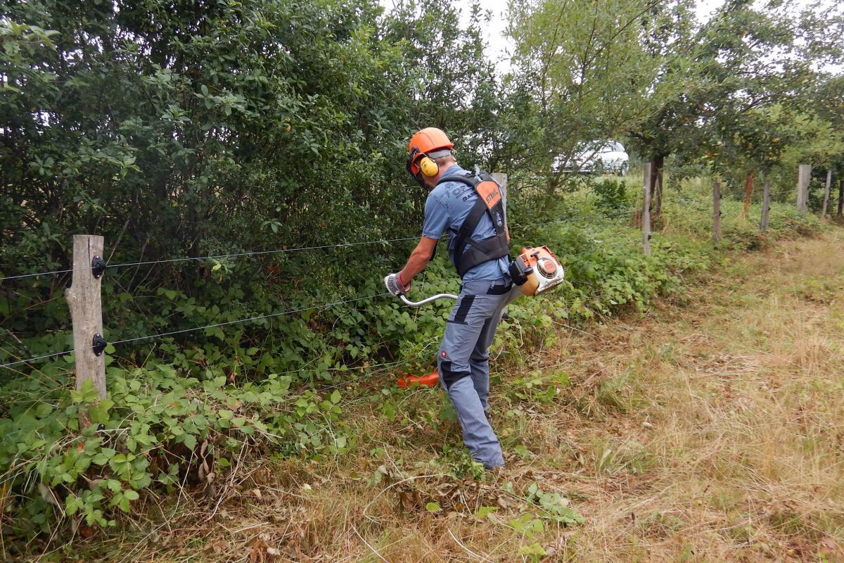 Einsatz des Freischneiders am Weidezaun